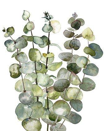 Eucalyptus print in watercolor